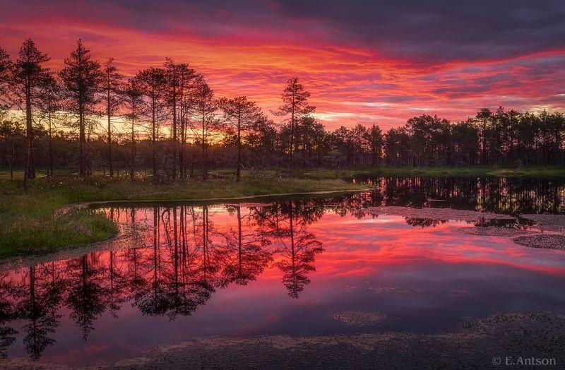 пейзаж, природа, болото, эстония Красочный рассвет фото превью