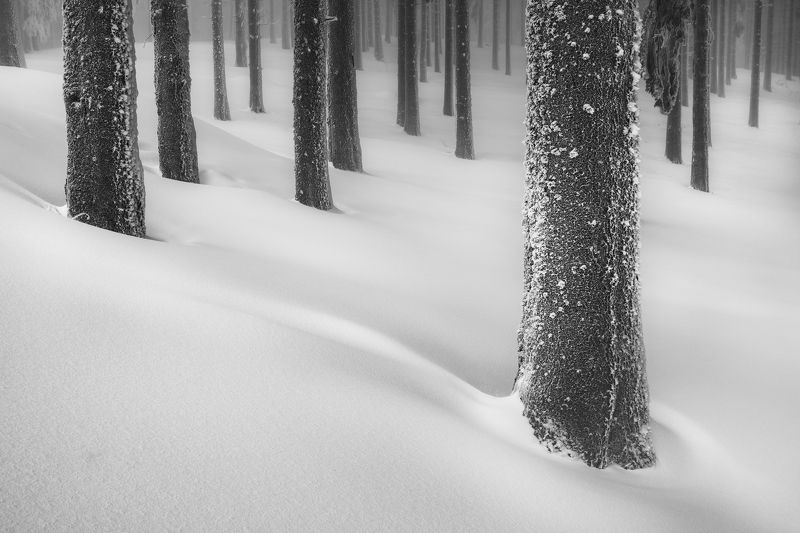 In the woodsphoto preview
