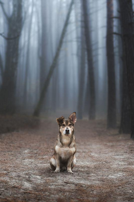 собака, животное Страж лесаphoto preview