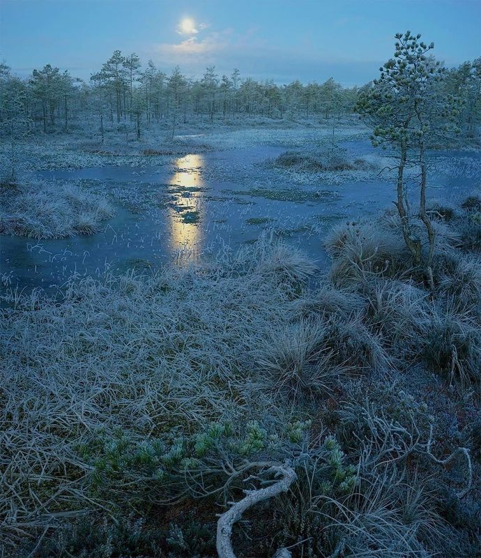 Луна, болото, ночь Лунное болотоphoto preview