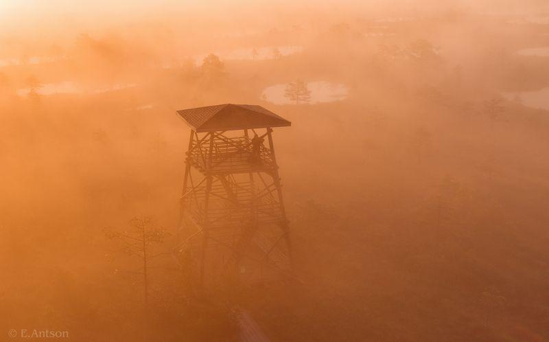 пейзаж, природа, болото, эстония Туманный рассвет фото превью
