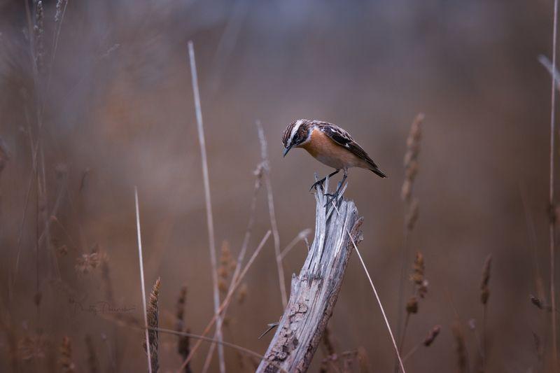 природа, лес, поля, огороды, животные, птицы, макро Взгрустнулосьphoto preview