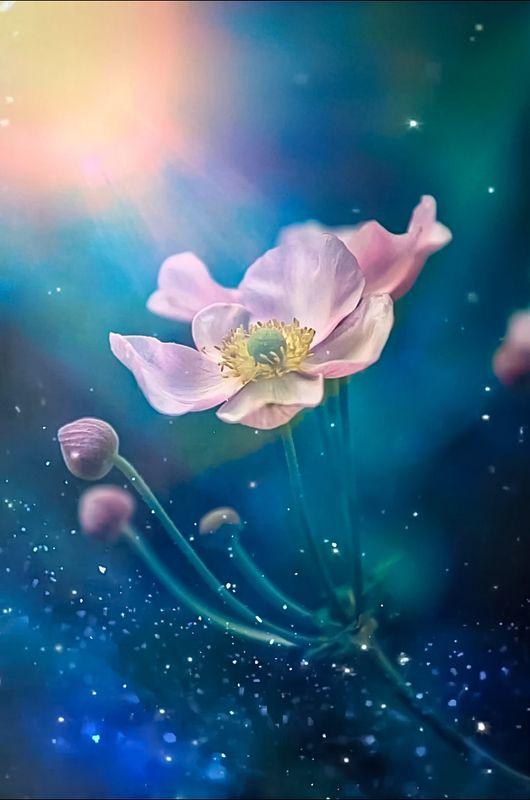 макро, цветы, flowers, macro, анемона Anemonephoto preview