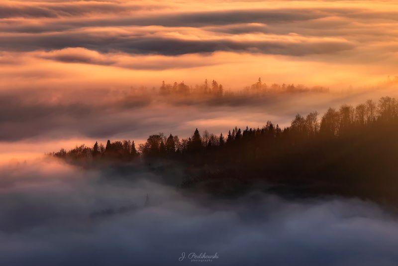 forest, mist, fog, sunset, Misty forestphoto preview