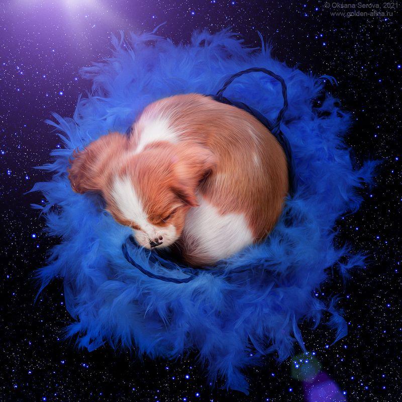 The Supernovaphoto preview