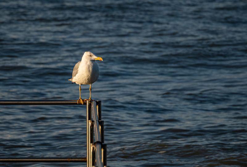 Сочинские птичкиphoto preview