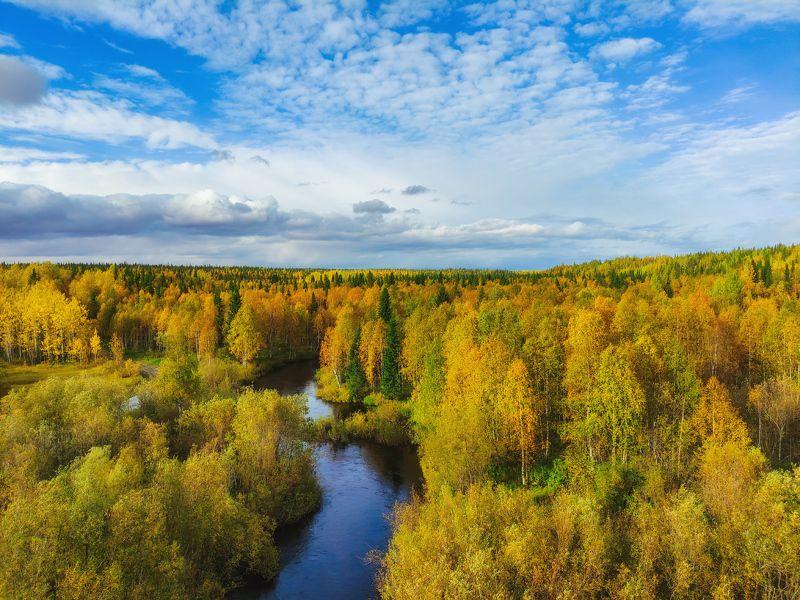 печора, лес, север Таёжная осеньphoto preview