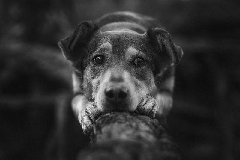 собака, животное В раздумьяхphoto preview
