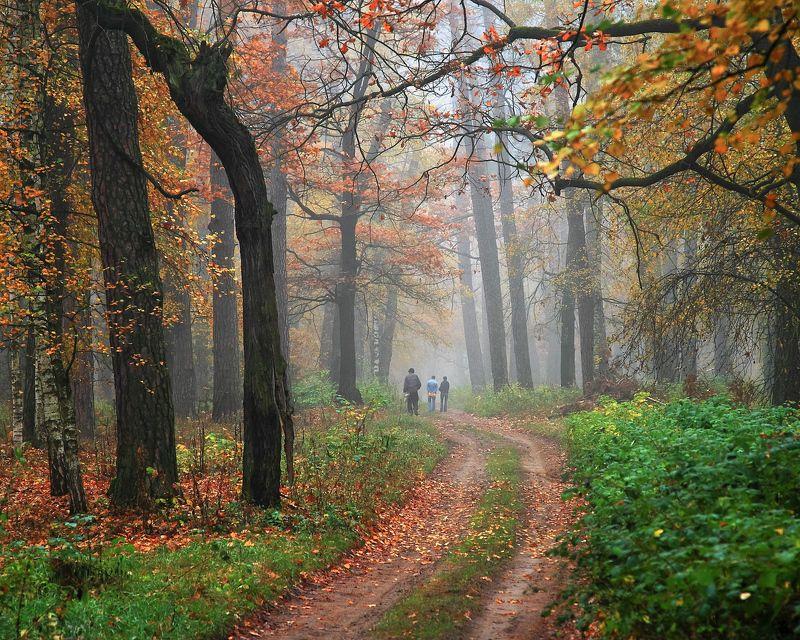 Лес, осень, туман. Прогулкаphoto preview