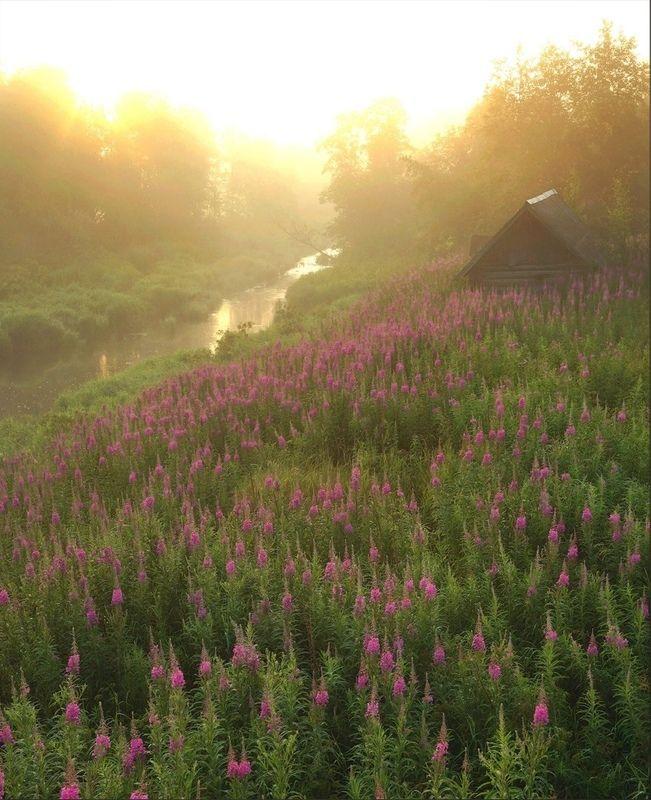 Деревня, рассвет, река, цветы Золотой туманphoto preview
