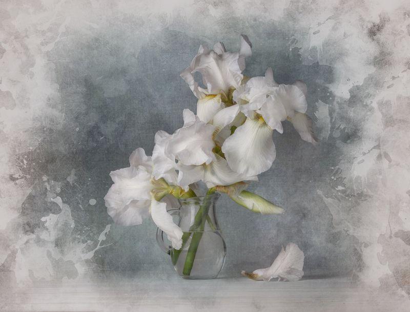 натюрморт, цветы, ирисы Белые ирисыphoto preview