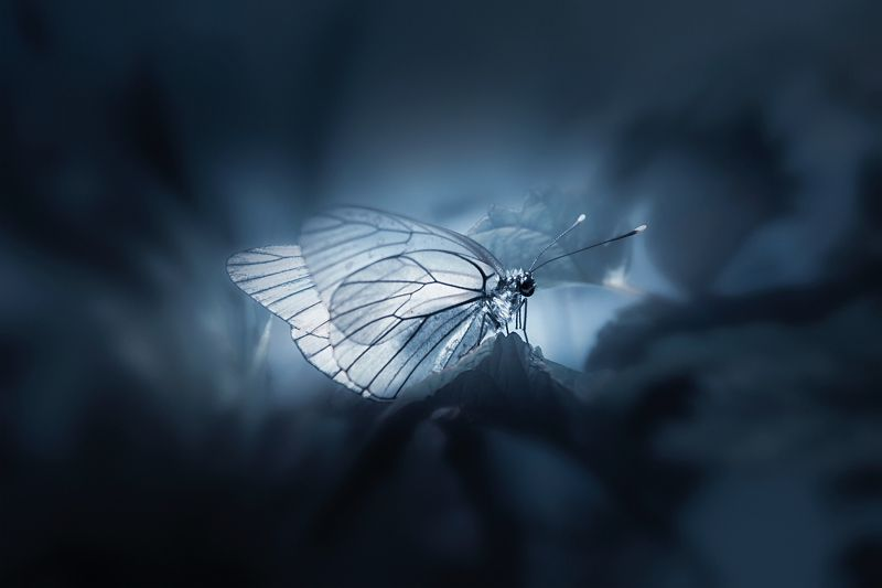 бабочка Бабочки светлый цветокphoto preview