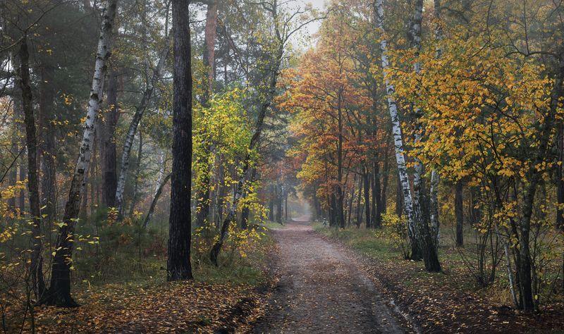 лес, осень, октябрь, утро, туман, сырость И не слышно ни стука, ни звука, тишина и покой здесь царятphoto preview