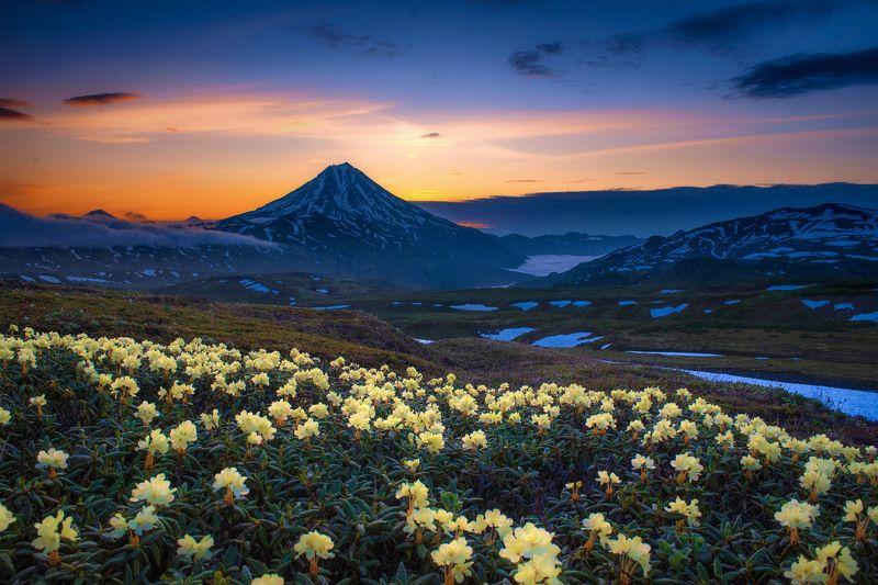 камчатка,рододендрон,рассвет,вулкан,kamchatka,vulkan цветущие поляныphoto preview