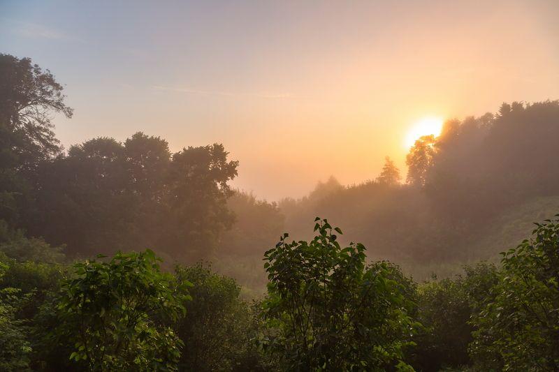 Туман, утро, роща Розовый восходphoto preview