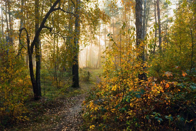 лес осень октябрь утро туман Пришел октябрь и вспыхнул лесphoto preview