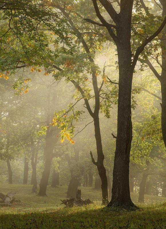 природа утро туман деревья Начало осени фото превью