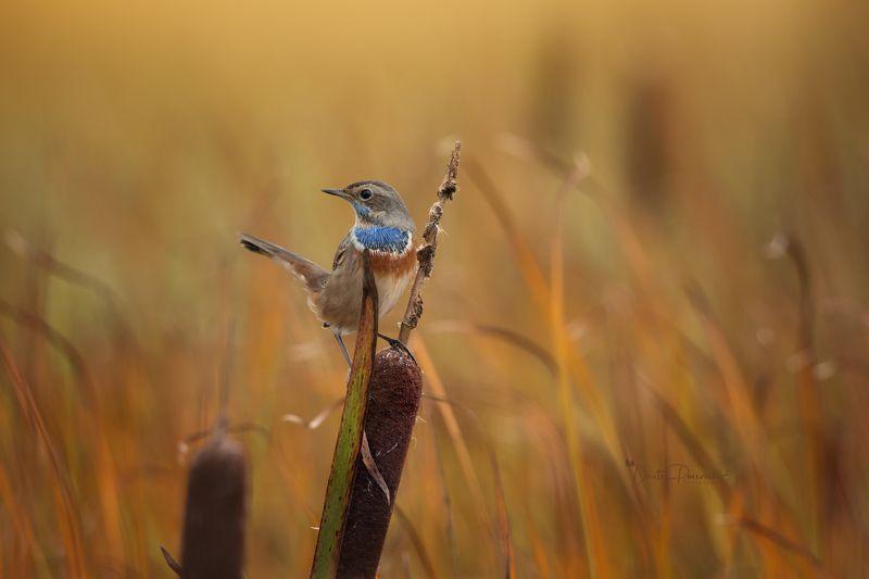 природа, лес, поля, огороды, животные, птицы, макро Первый взрослый нарядphoto preview