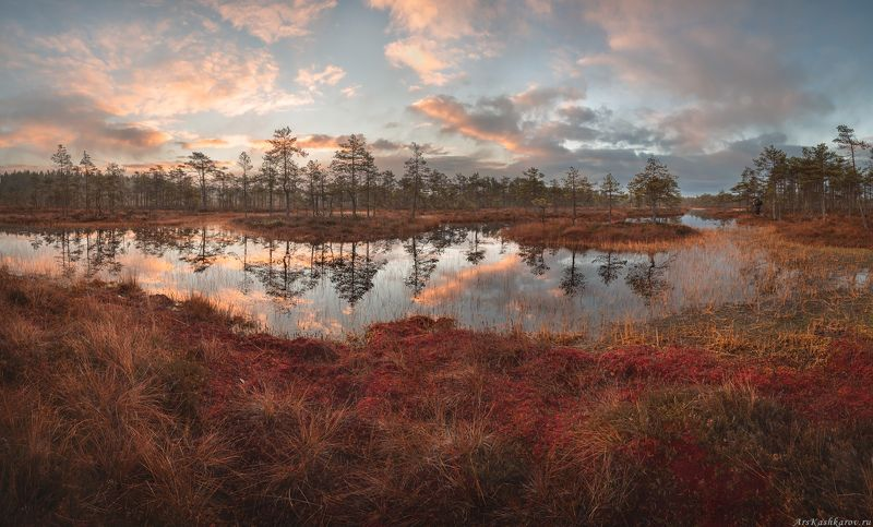 ленинградская область, ленобласть, болото, болотное озеро, мох, сосны, отражение, краски осени \