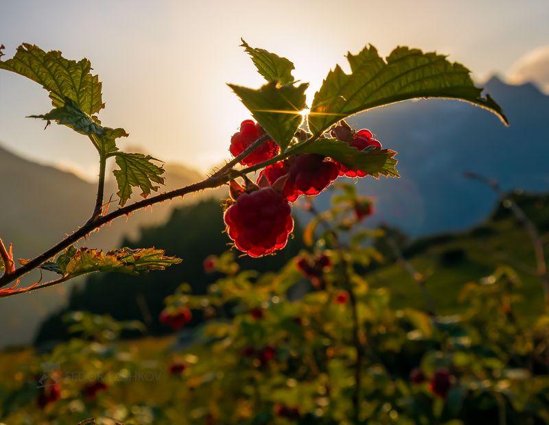 северный кавказ, макро, луг, трава, лето, летнее, малина, ягода, красный, зелёный, горы, вершины, горное, Вкус летаphoto preview