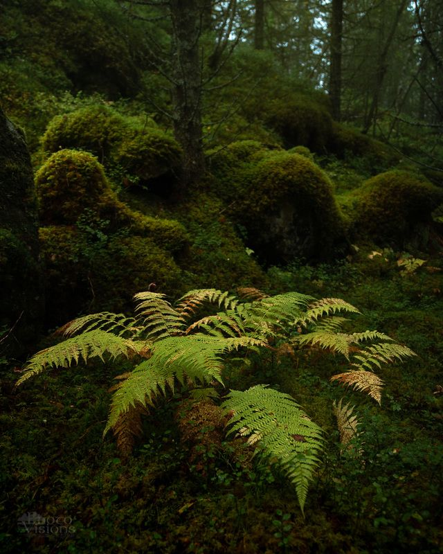 woodland,woods,forest,norway,boreal,nature,norwegian, Signs of Autumn фото превью