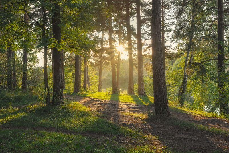 закат, природа, Московская область, лес, сосны, пейзаж, осень Сентябрьphoto preview