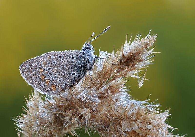 Утренняя бабочкаphoto preview