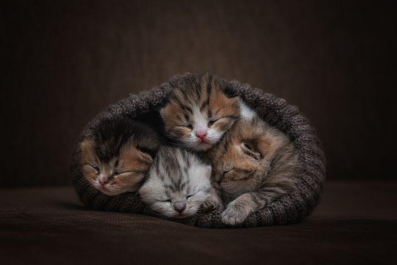 котята, кошка, cat Сладкий сонphoto preview
