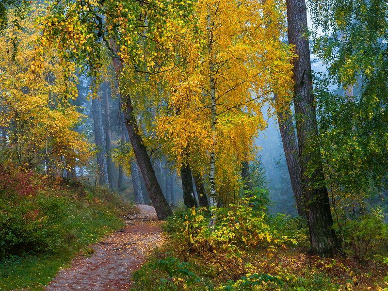 Лес, туман, осень, пейзаж, природа Захмелел осенний лесphoto preview