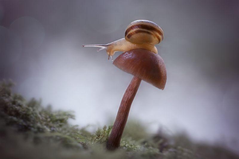 макро, улитка, snail, macro, грибы, лес, волшебное макро Лесные историиphoto preview