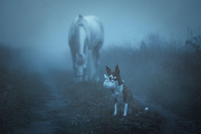 В Тумане..photo preview