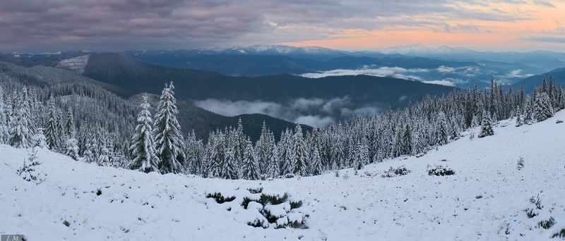 горы, утро, пейзаж, панорама, снег, ели, Карпаты, туман, Carpathians, mountains, morning, landscape, panorama, pine, trees, fog, mist, clouds, view, sky, snow Crispy morningphoto preview