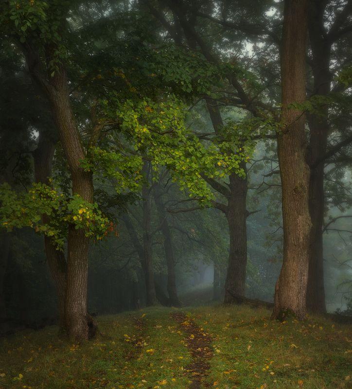 природа утро туман деревья Подступающая пора меланхолии фото превью