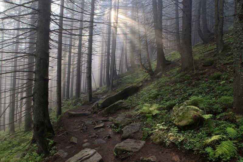 Лучи солнца в заповедном лесу фото превью
