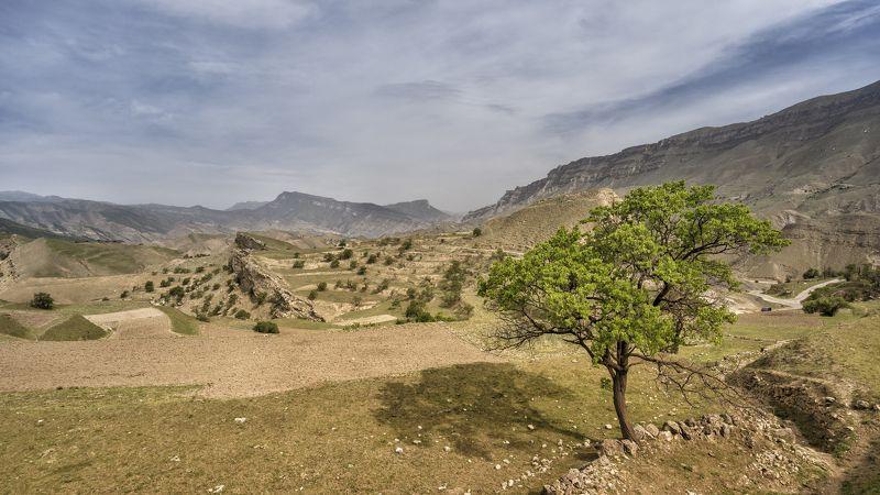 дагестан чох горы поле Дагестан. Чох.photo preview