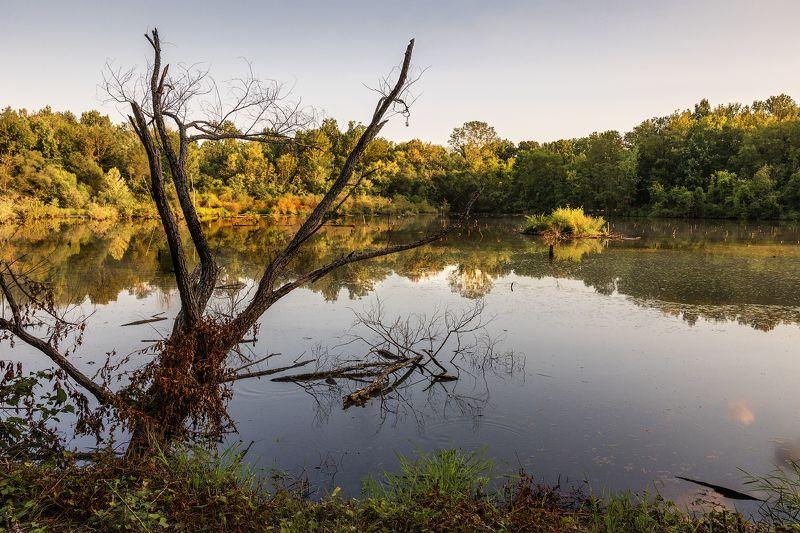 Старый пруд