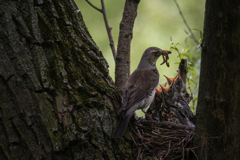 природа, лес, поля, огороды, животные, птицы, макро Хор в ясляхphoto preview