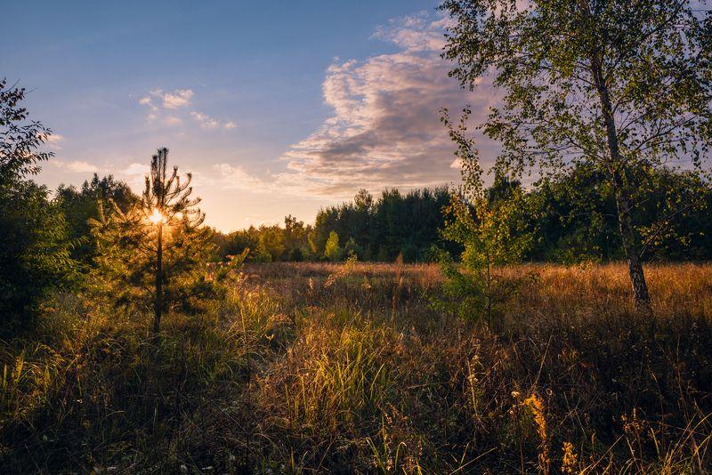 луг, осень, сентябрь, вечер, закат Последний луч заката солнца окрасит всё в багровый цветphoto preview