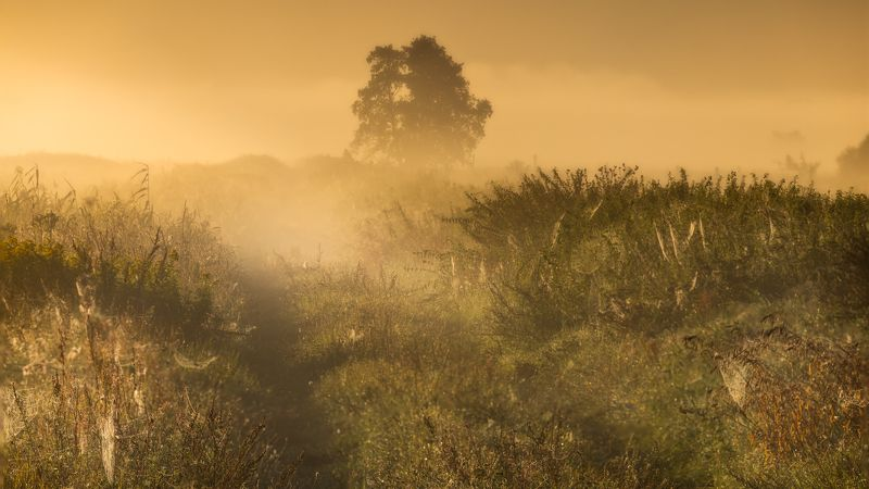 Morning fogphoto preview