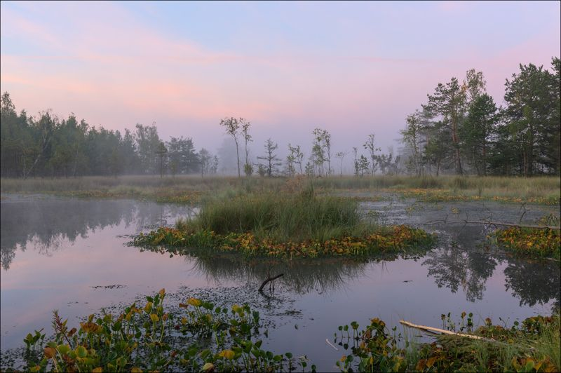 Августовское утро на торфяникахphoto preview