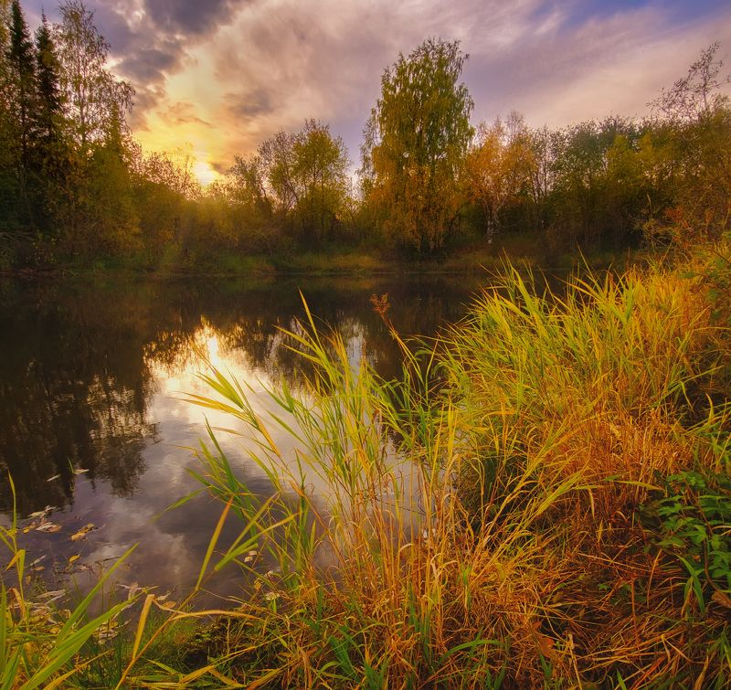 печора, лес, север Осенняя пора севераphoto preview