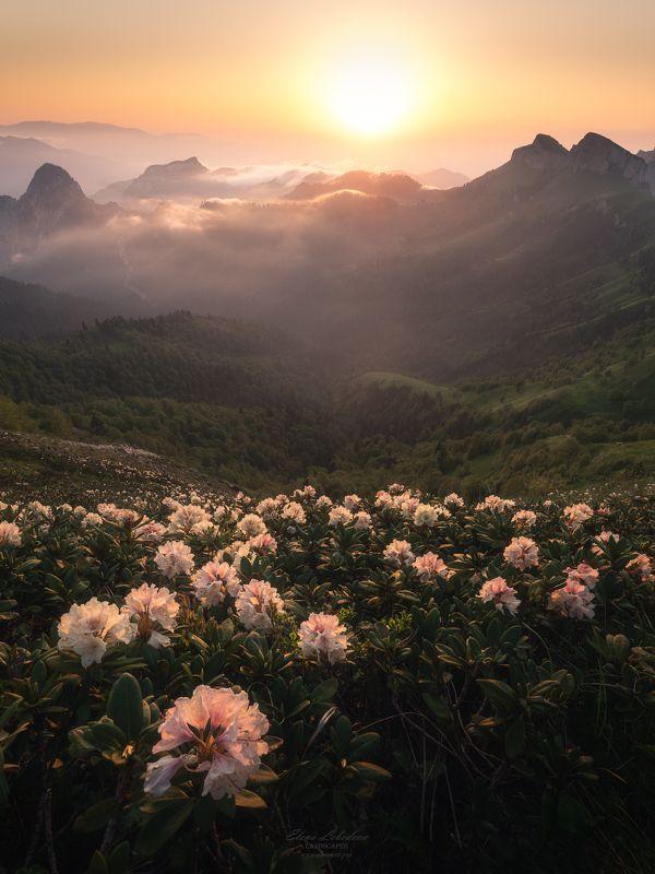закат, рододендрон, кавказ, тхач, горы, туман, пейзаж, природа, россия, лето Закат с рододендронамиphoto preview