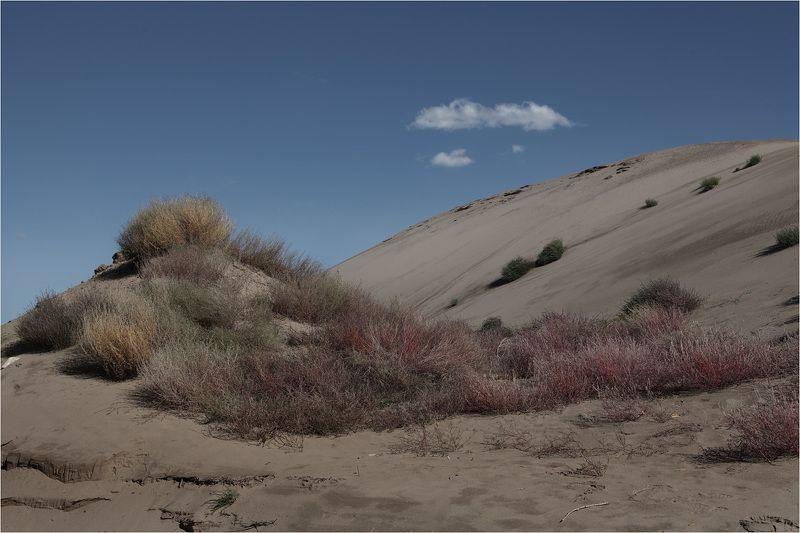 бархан пустыня Барханphoto preview
