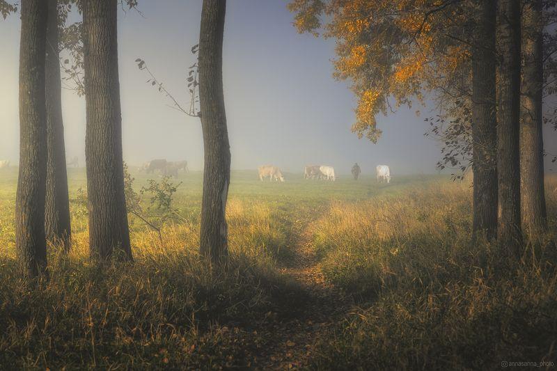 Осень пришла в Боголюбовоphoto preview