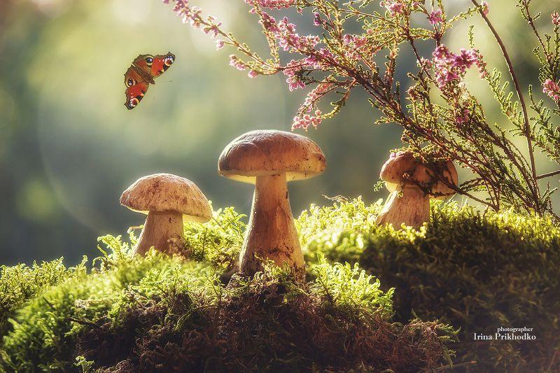 постановочная фотография, осень, грибы, лес Сказки грибного лесаphoto preview