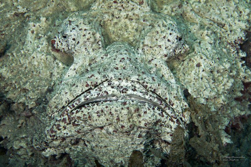 подводное фото подводный мир хургада египет жогло zhoglo красное море Лицо или Мордаphoto preview