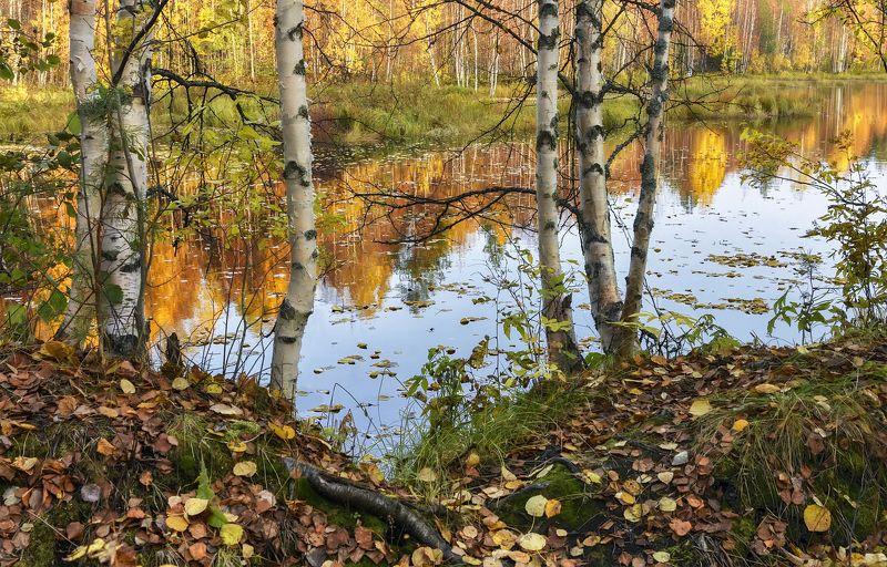 осень сентябрь река берег вода листья отражения березы кусты деревья тишина Осенняя зарисовкаphoto preview