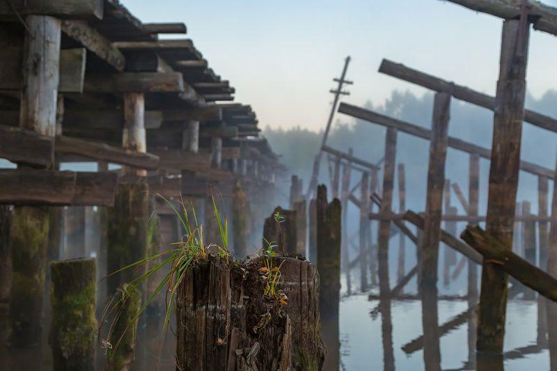 река, утро, туман, мост Старый мостphoto preview