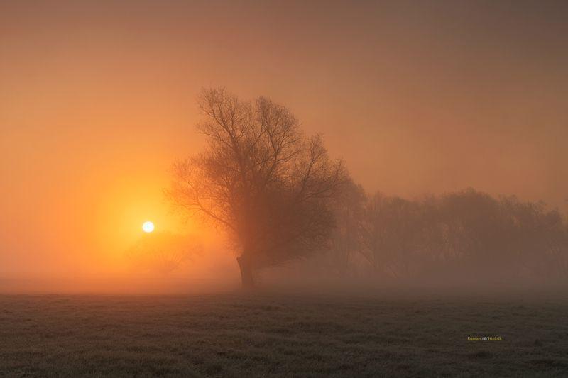landscape, Kociewie, Poland, sunrise, fog, tree, orange colors, fields Kociewiephoto preview