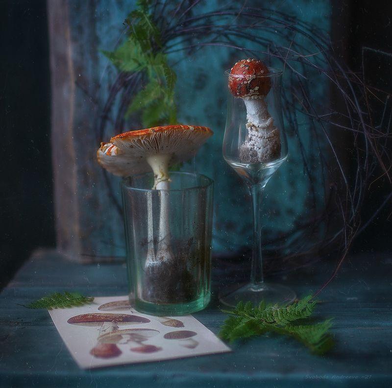 коктейль из благородных грибов*photo preview